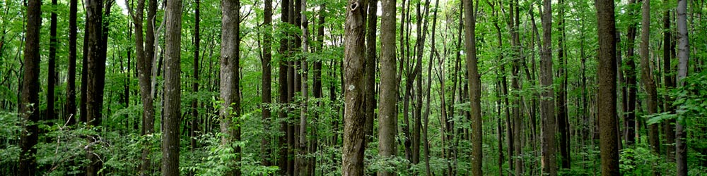 reforestation_blog1