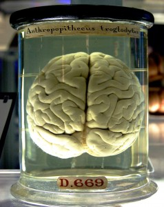 A Brain, not Travelling