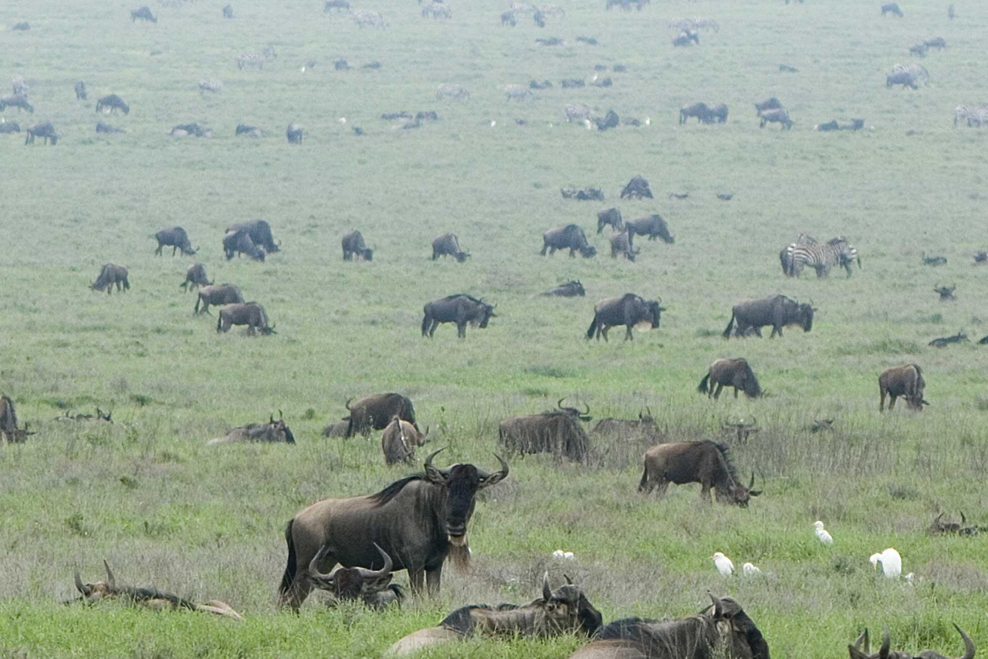 Tanzania: Serengeti Great Migration Safari