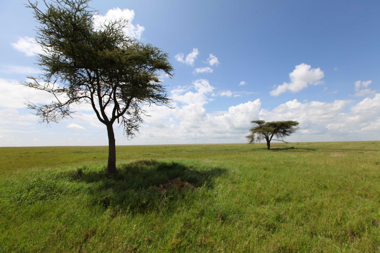 Great Migration's landscape-the Serengeti