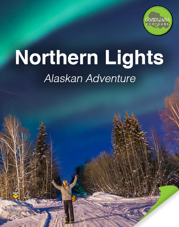 Northern Lights Alaskan Adventure