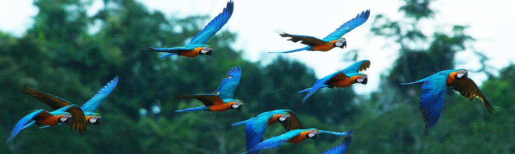 Birds of the Amazon Rainforest