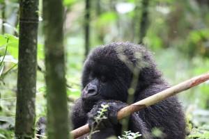 Travel Rwanda