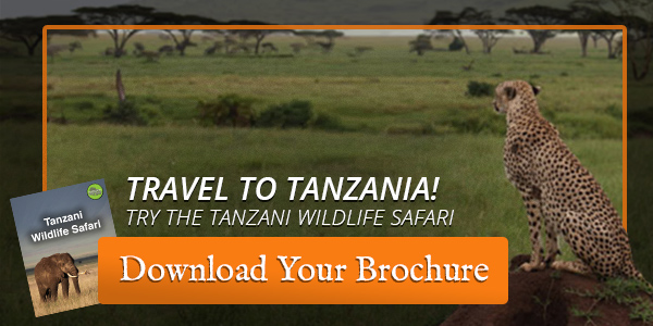 tanzania safari vacation trip