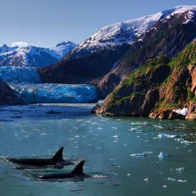 Glaciers and whales in Kenai Fjords National Park