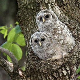 More cute owls