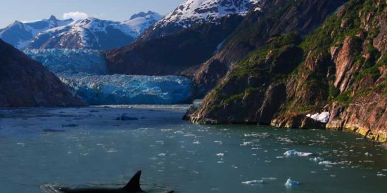 Glaciars & Orcas in Kenai Fjords National Park