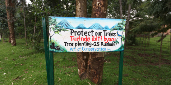 Protect the trees in Rwanda